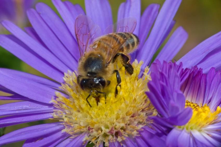 przerażający pszczoły w penisie