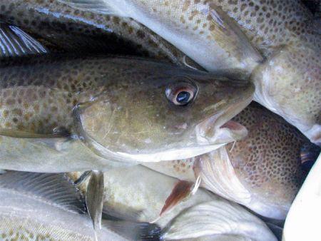 Ryby I Ssaki Morskie G Uchn