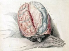brain_blogger, Flickr, CC-BY