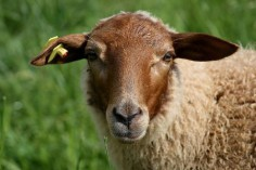 © angelaelse