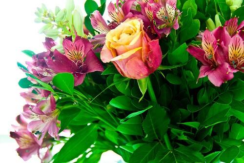 http://kopalniawiedzy.pl/media/lib/36/kwiaty-ecda612c7d95e74da34e4706a2dfd8d4.jpg