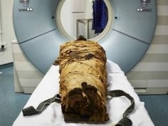 Leeds Teaching Hospitals/Leeds Museums and Galleries