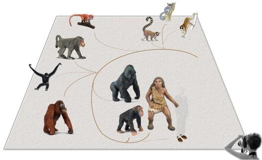 datowanie węgla dowodzi ewolucji