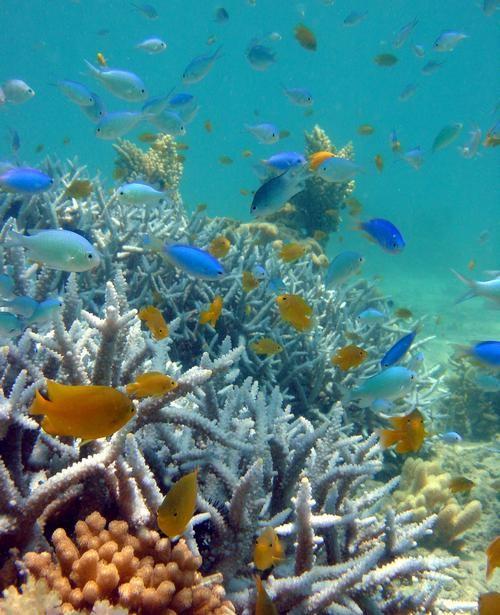 Dwutlenek węgla gubi ryby morskie | KopalniaWiedzy.pl