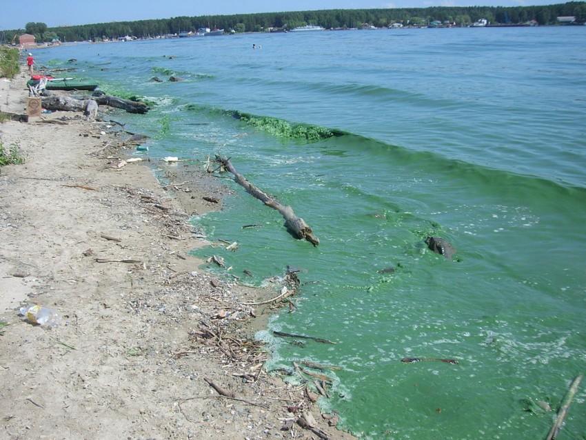 Plankton wchłania więcej węgla | KopalniaWiedzy.pl